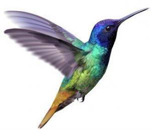 Hummingbird Update